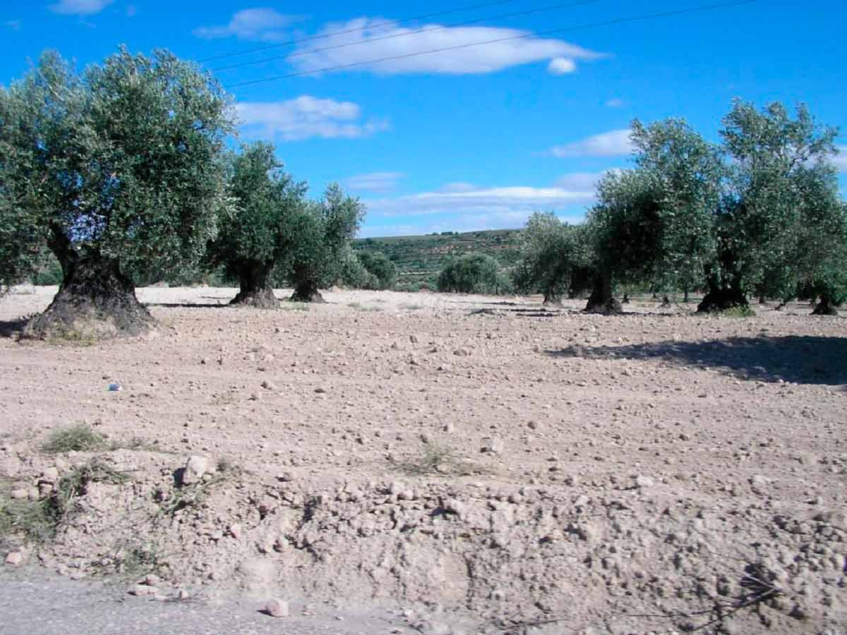 madrid-downtown-and-madrid-countryside-private-tours.-Olivar
