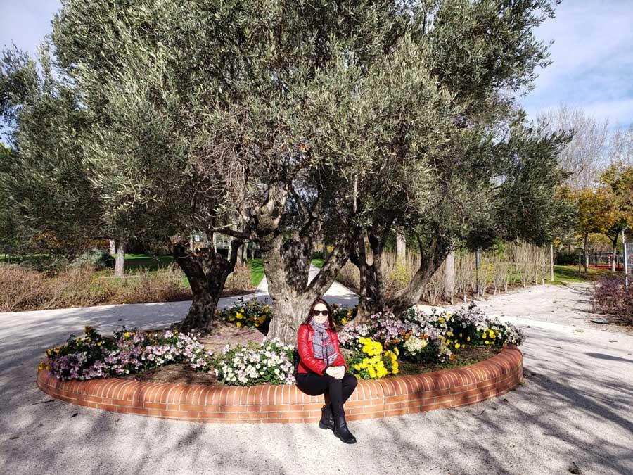 Juan Carlos I Park. Olive trees and Irina
